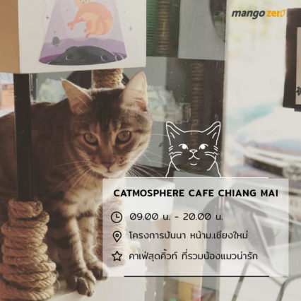 10-catcafe-in-thailand-11