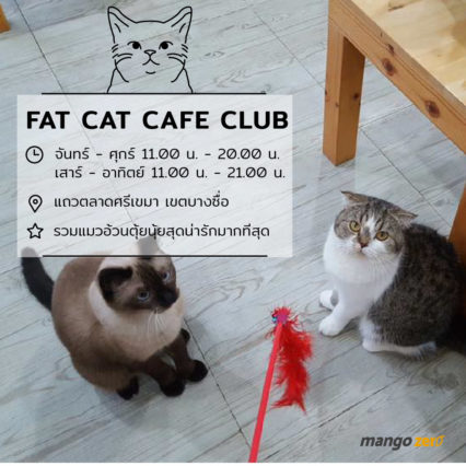 10-catcafe-in-thailand-2