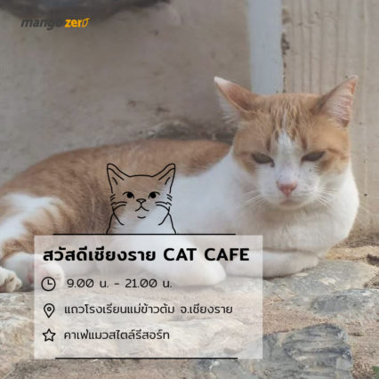 10-catcafe-in-thailand-5