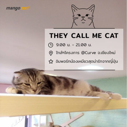 10-catcafe-in-thailand-6