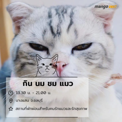 10-catcafe-in-thailand-7