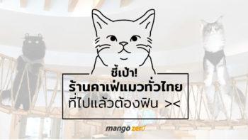 ชี้เป้า !! 10 ร้านคาเฟ่แมวทั่วไทย ที่ไปแล้วต้องฟินกับน้องเหมียว