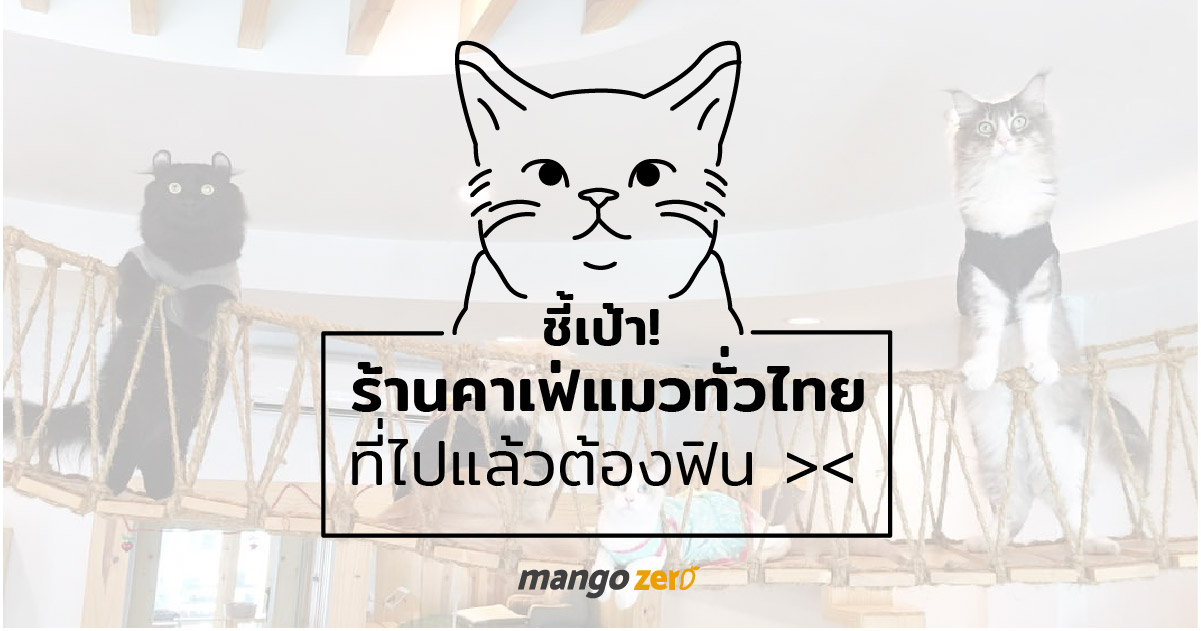 10-catcafe-in-thailand-8