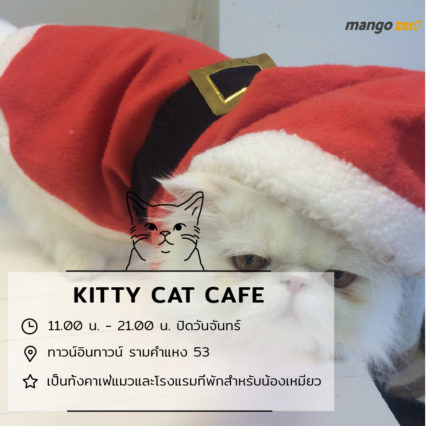 10-catcafe-in-thailand-9