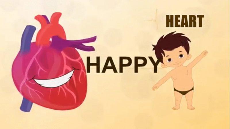 3.heart circulation