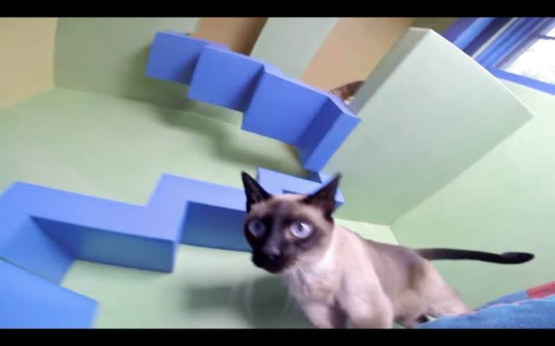 zenbycat-house-adopt-rescue-22-cat-build-catwalk-for-20-year-story-2