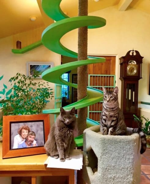 zenbycat-house-adopt-rescue-22-cat-build-catwalk-for-20-year-story-5
