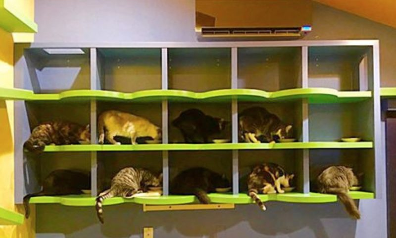 zenbycat-house-adopt-rescue-22-cat-build-catwalk-for-20-year-story-7