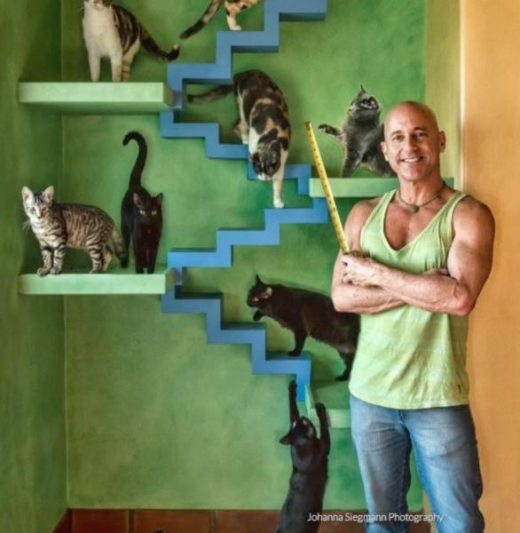 zenbycat-house-adopt-rescue-22-cat-build-catwalk-for-20-year-story-9