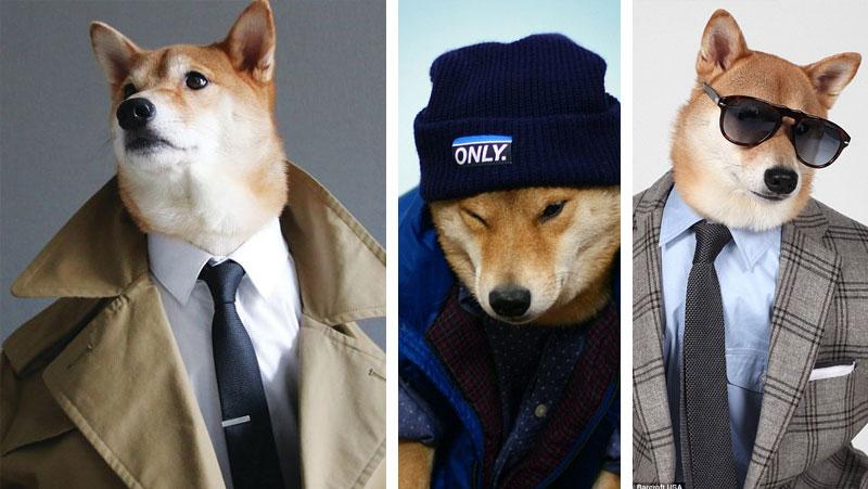 bodhi-menswear-dog-shiba-inu-1