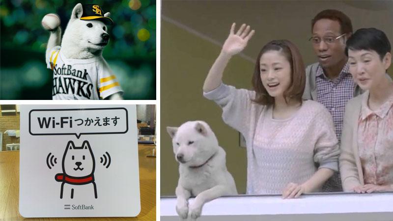 otosan-shiba-inu-dog-3