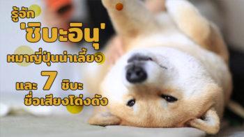 รู้จัก 'ชิบะอินุ' หมาญี่ปุ่นน่ารักน่าเลี้ยง และ 7 ชิบะไอดอลสุดดัง ที่ต้องไปกด Like !!