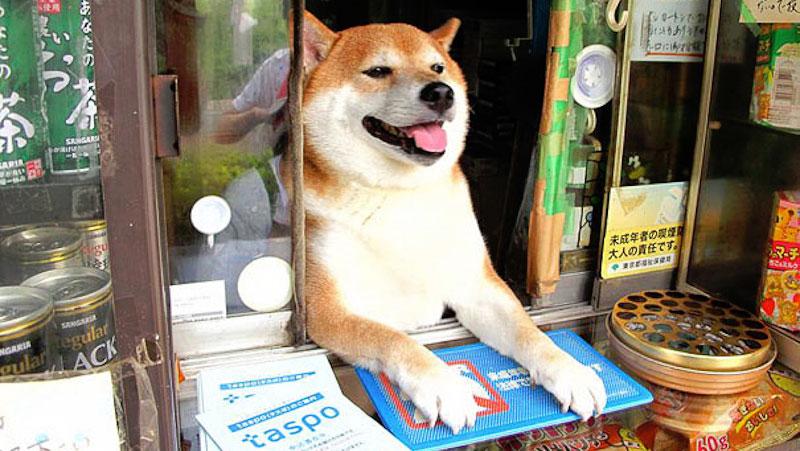 shiba-shiba-inu-dog-store-tobacco