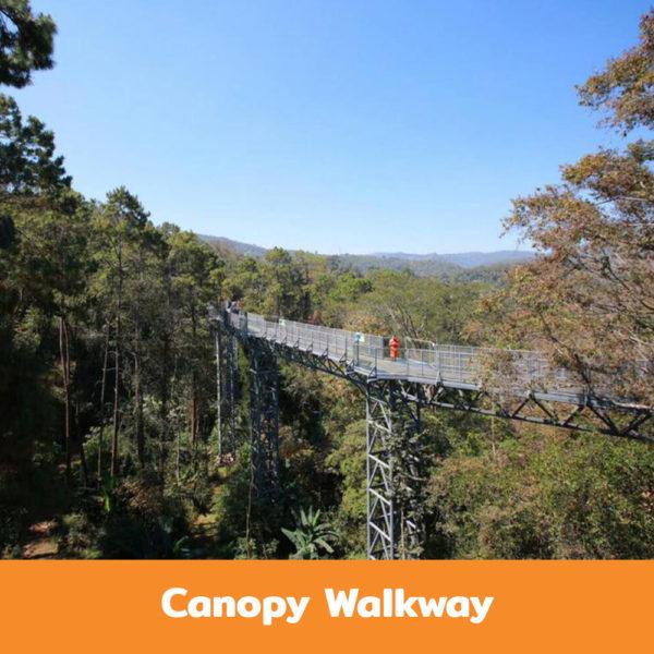Canopy-Walkway