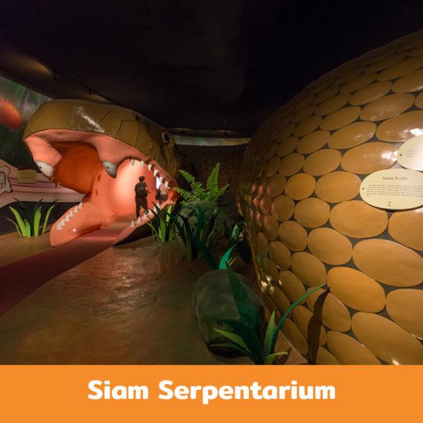Siam-Serpentarium