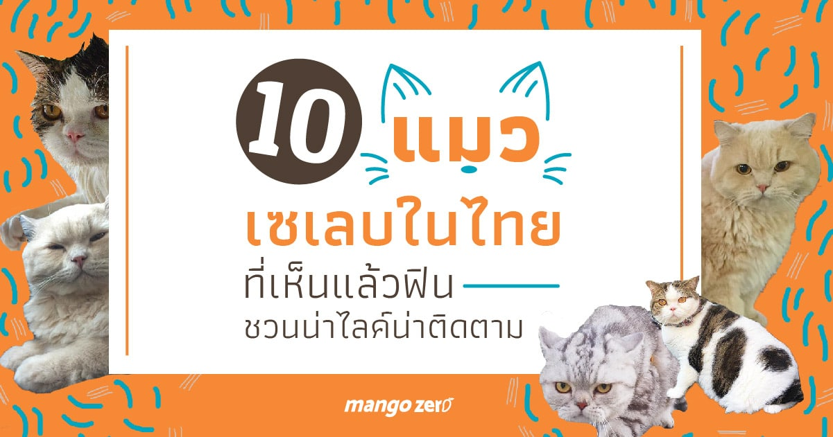 10-celeb-cats-in-thailand-follow-up