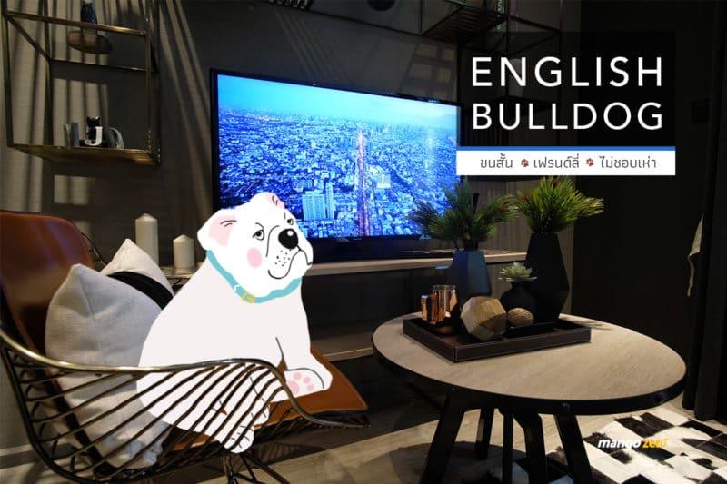10-apartment-dogs-list-by-maestro-19-bulldog