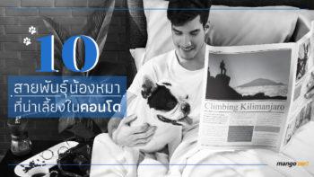 10 สายพันธ์ุน้องหมาที่น่าเลี้ยงในคอนโดได้โดยไม่รบกวนเพื่อนบ้าน