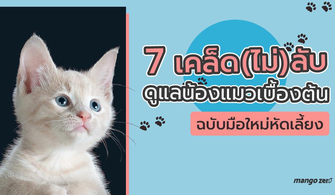 7 เคล็ด(ไม่)ลับ ดูแลน้องแมวเบื้องต้น ฉบับมือใหม่หัดเลี้ยง