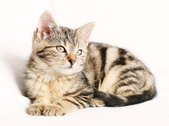 how-to-cat-carecat-1192026_1920