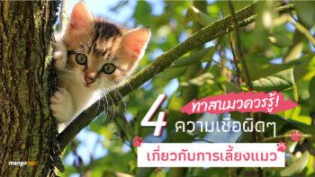 ทาสแมวควรรู้! 4 ความเชื่อผิดๆ เกี่ยวกับการเลี้ยงแมว (ชมคลิป)