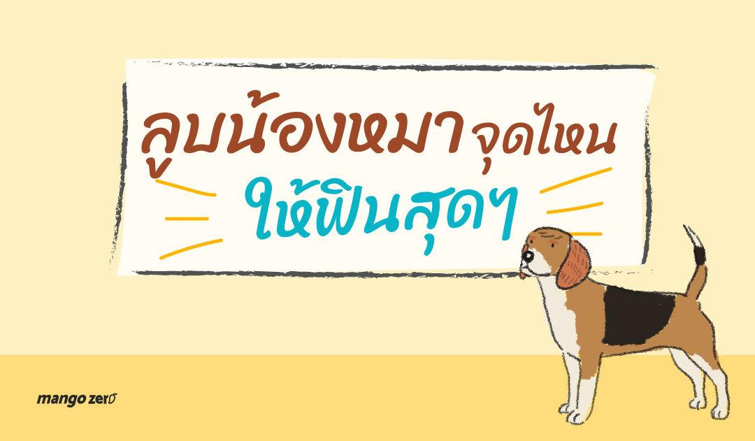 สาวกน้องหมาต้องรู้ ลูบน้องหมาจุดไหน ให้ฟินสุดๆ และจุดไหนที่ควรเลี่ยง