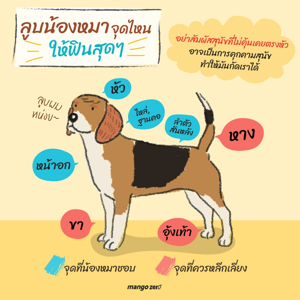 which-part-of-dog-you-should-touch-04