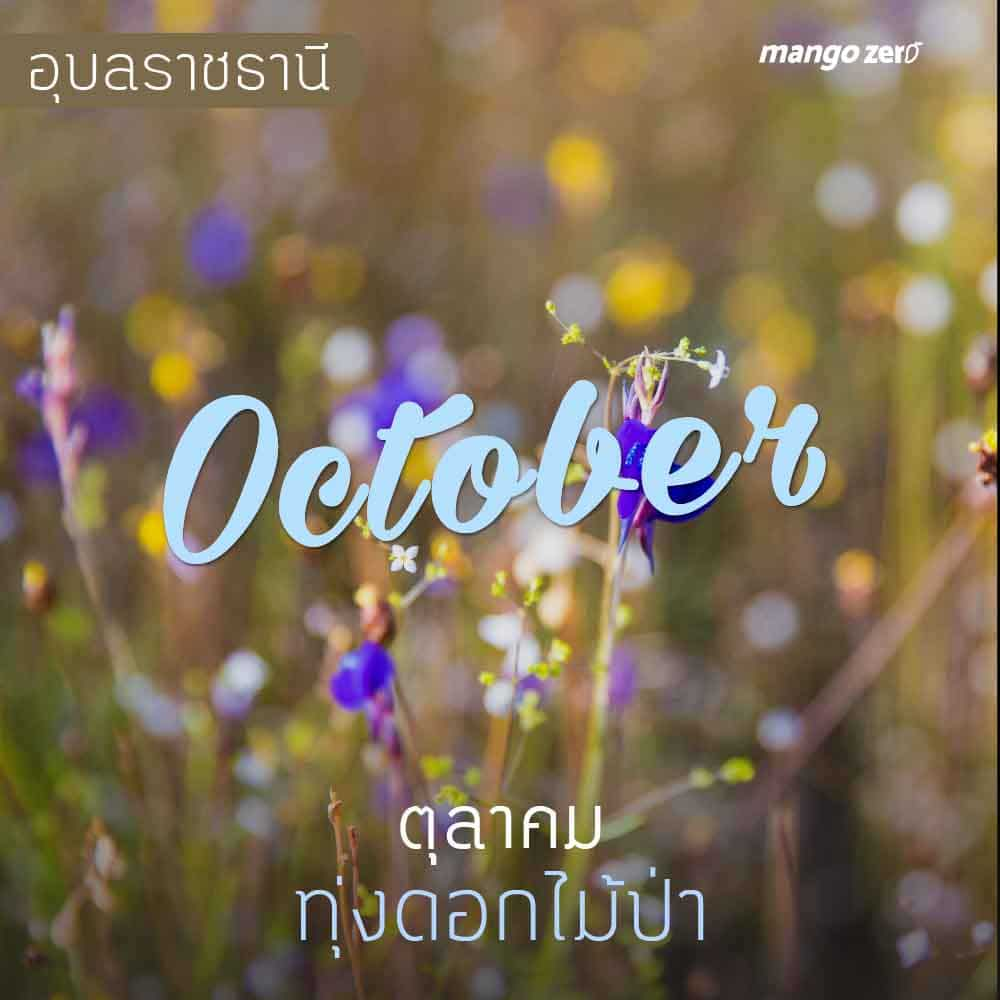 12-places-flowers-travel-all-year-in-thailand10