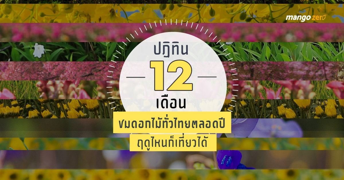 12-places-flowers-travel-all-year-in-thailand16-03