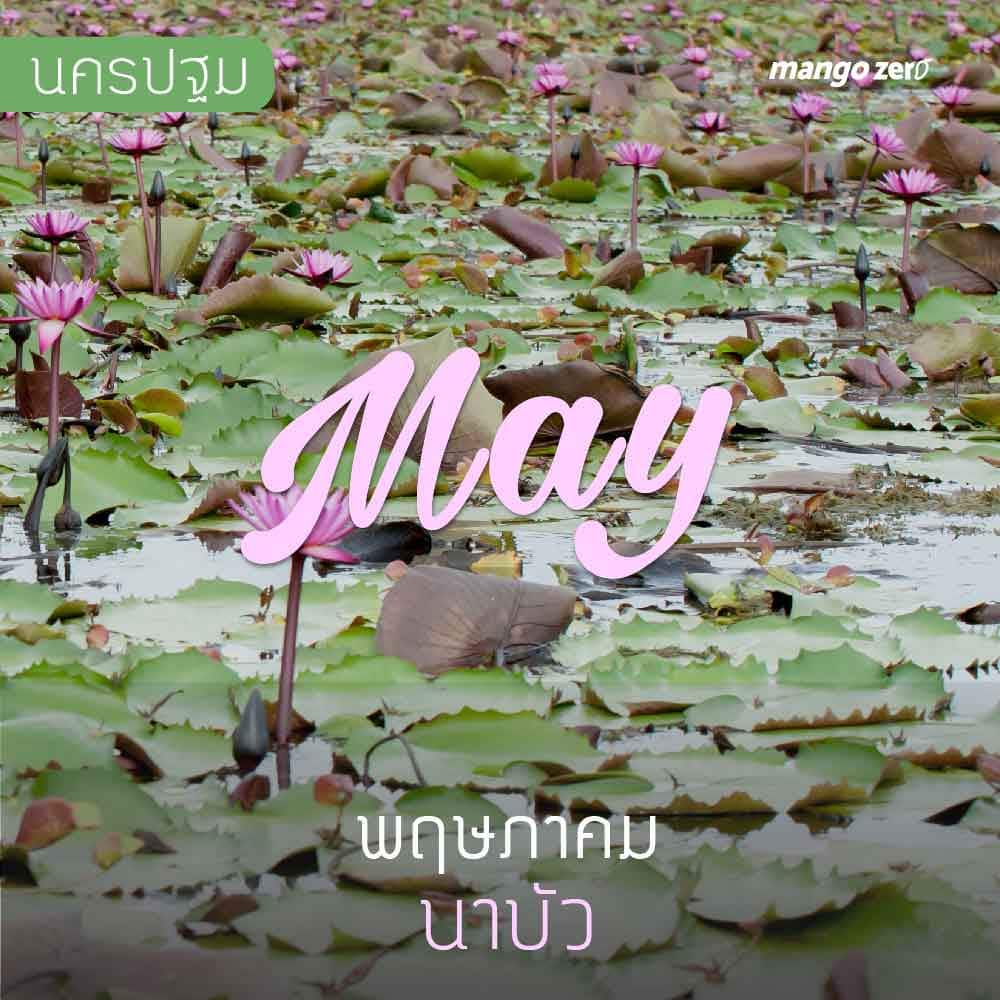 12-places-flowers-travel-all-year-in-thailand5
