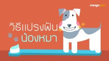 วิธีแปรงฟันน้องหมา ให้ขาวสะอาด สุขภาพดี
