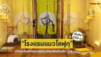"""รีวิว """"โรงแรมแมวโคฟูกุ"""" บริการรับฝากแมวพร้อมห้องพักส่วนตัว ไม่ขังกรง เริ่มต้น 250 บ."""