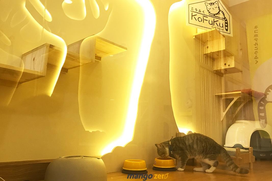 review-Kofuku-Cat-Hotel -14