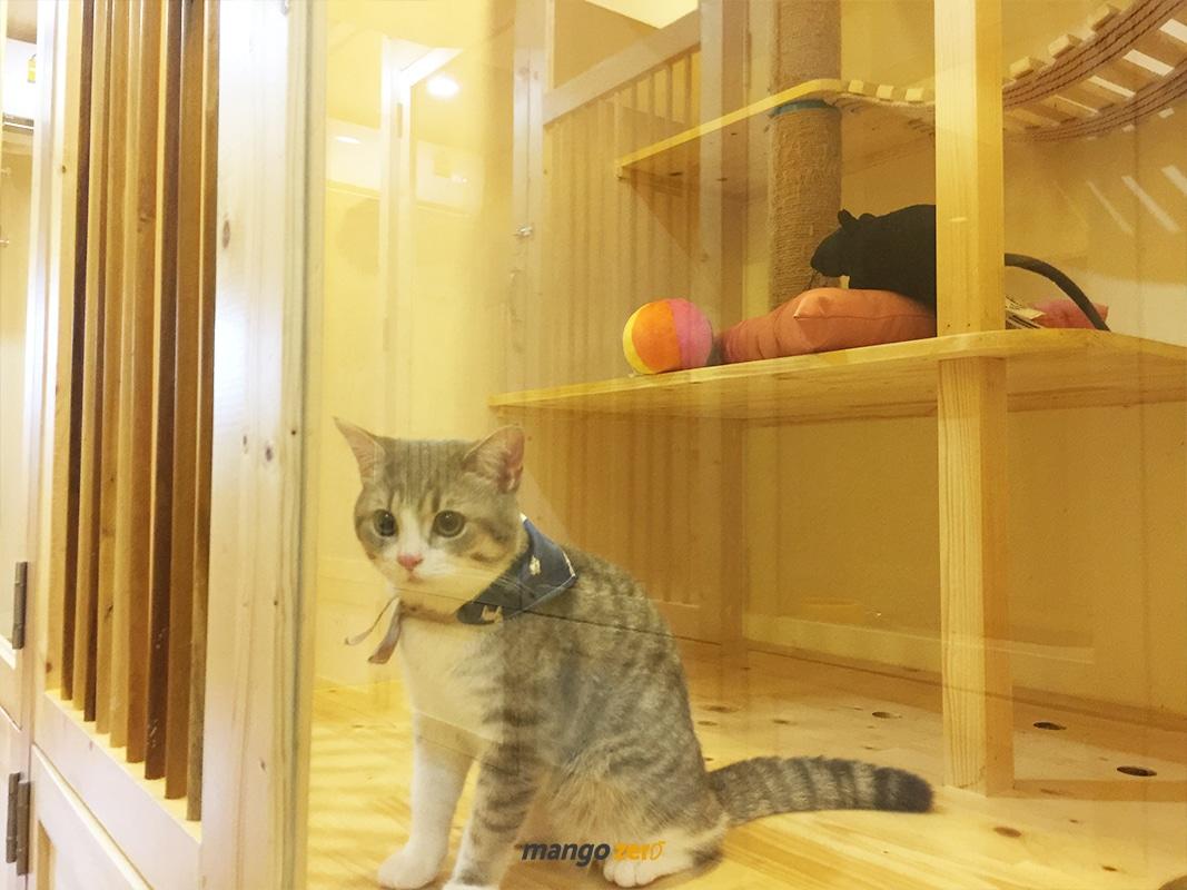 review-Kofuku-Cat-Hotel -2