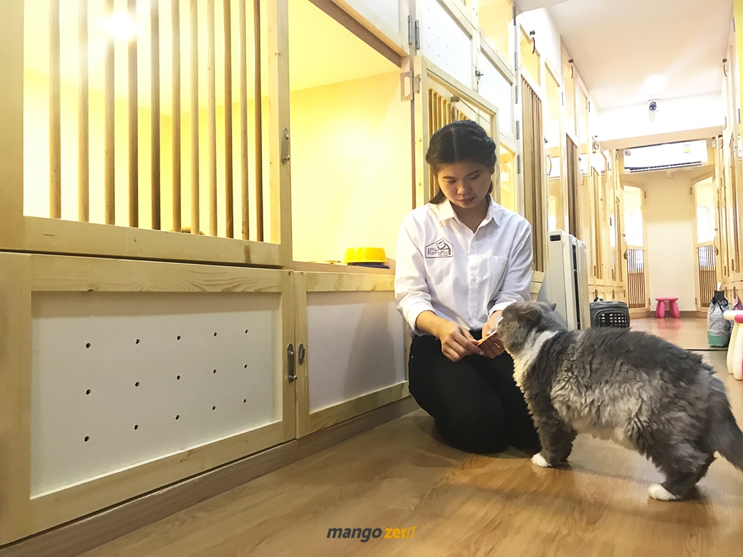 review-Kofuku-Cat-Hotel-6