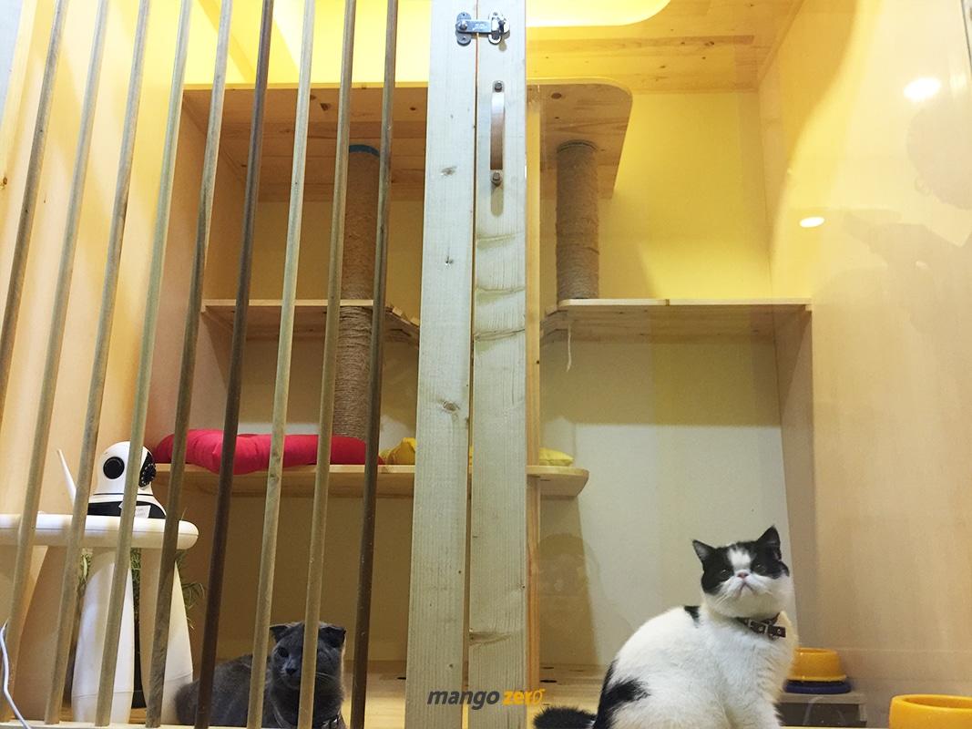 review-Kofuku-Cat-Hotel -9