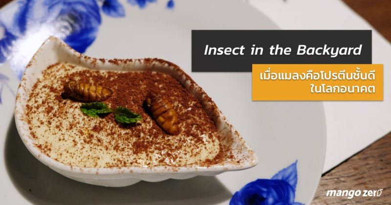review-insect-in-the-backyard-at-changchui