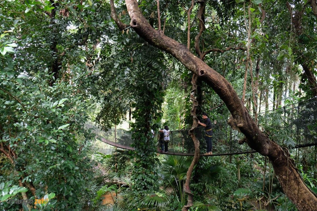 doitung-tree-top-walk-at-chiang-rai-22