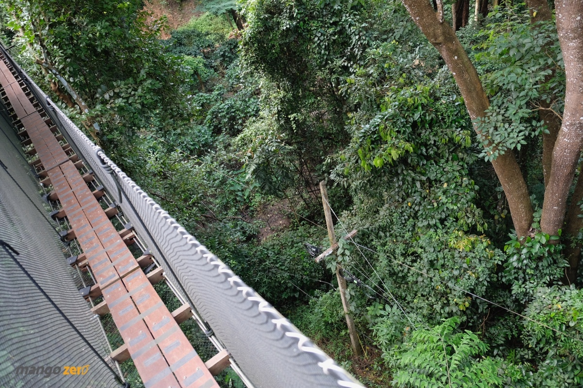 doitung-tree-top-walk-at-chiang-rai-28