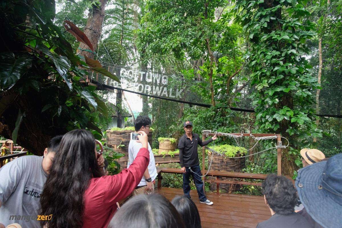 doitung-tree-top-walk-at-chiang-rai-9