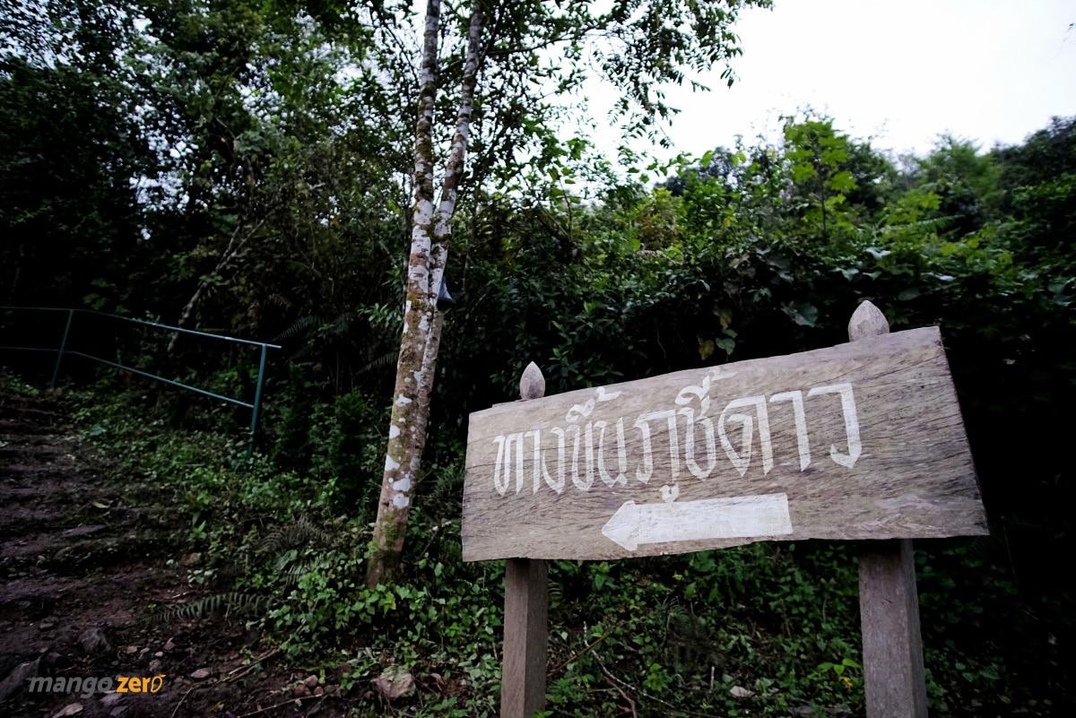 phucheedao-at-chiang-rai-1