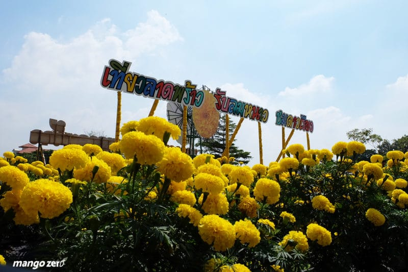 review-marigold-flower-field-at-Satriwitthaya-2-School-12