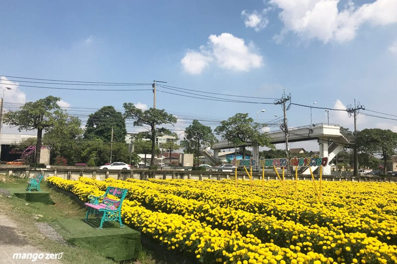 review-marigold-flower-field-at-Satriwitthaya-2-School-14