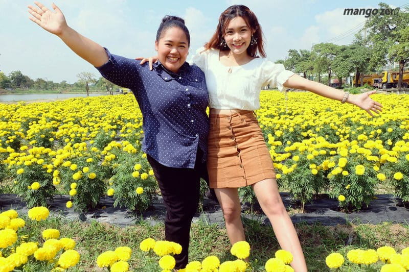review-marigold-flower-field-at-Satriwitthaya-2-School-2