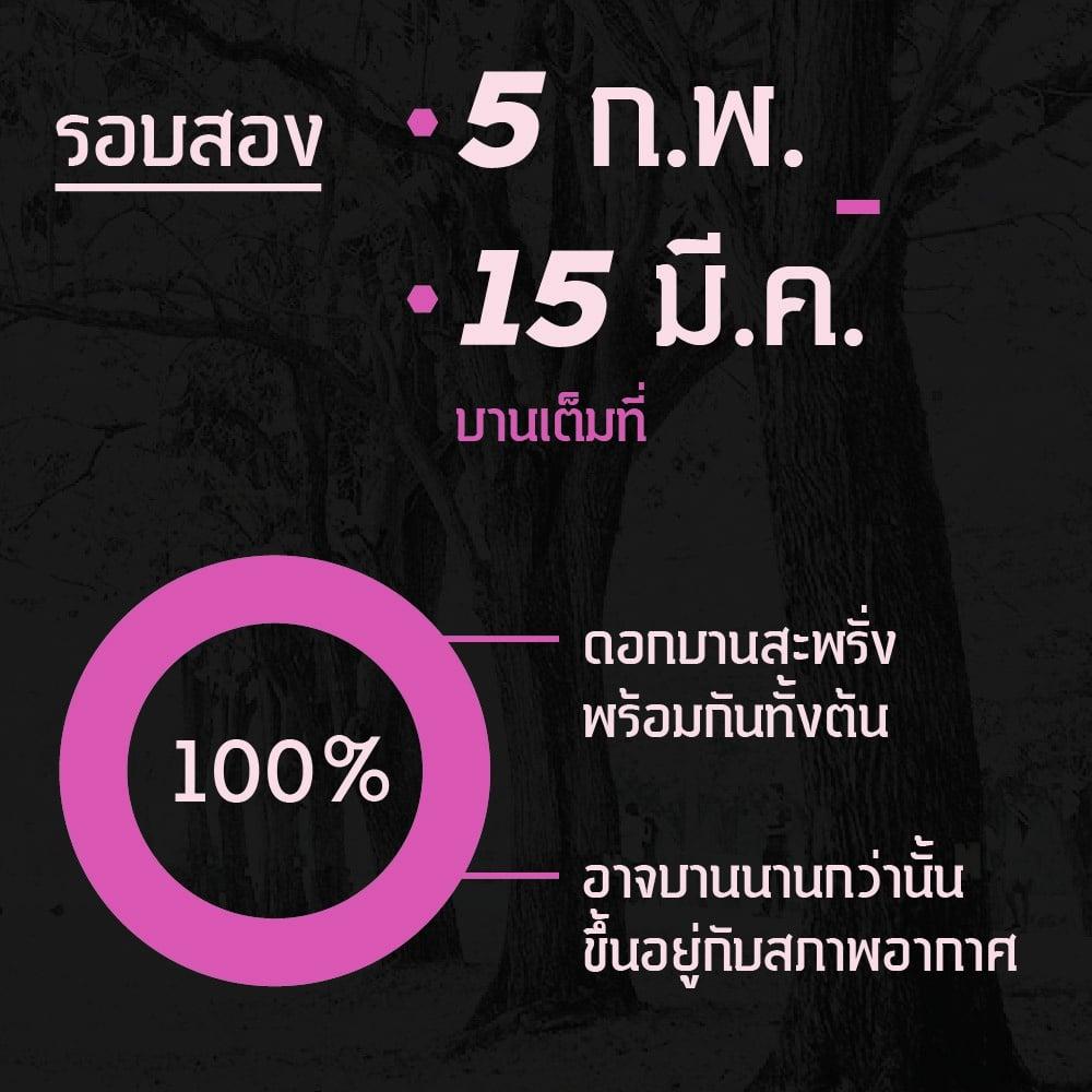 pink-trumpet-tree-forecast-03