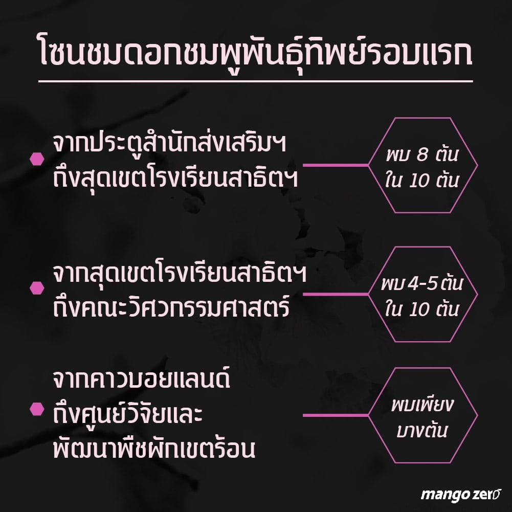pink-trumpet-tree-forecast-04