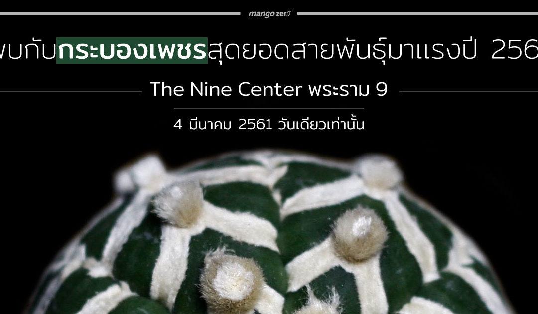 พบกับกระบองเพชรสุดยอดสายพันธุ์มาเเรงปี 2561 ที่ The Nine Center พระราม 9 วันที่ 4 มี.ค.นี้