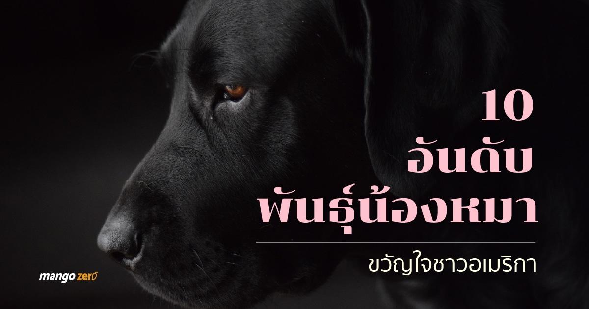 5-top-dog-breed-america-2017-01-01