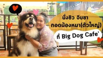 นั่งชิว จิบชา กอดน้องหมา (ตัวใหญ่) ที่ Big Dog Cafe'