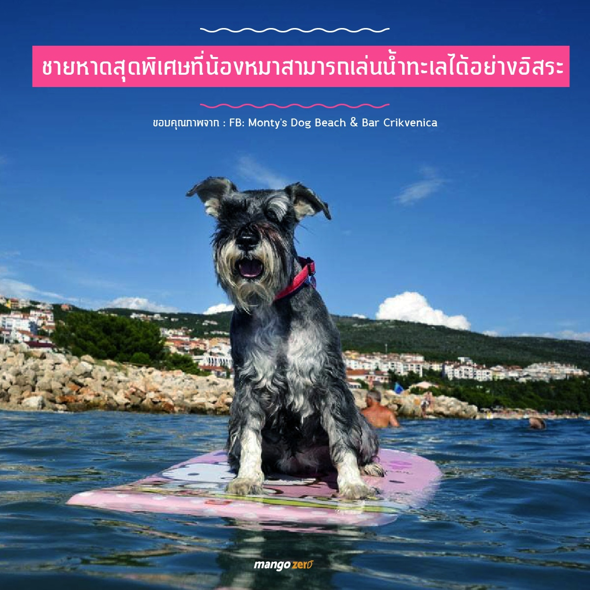 montys-dog-beach-bar-05